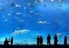 Tìm hiểu ngành Hải dương học là gì? học gì? ra trường làm gì?